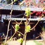 四季折々、いろんな表情が楽しめるサロンの庭