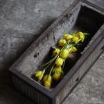 古道具と植物