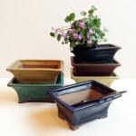 盆鉢や豆鉢