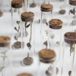 「小さな森」当店オリジナルのガラステラリウム風作品