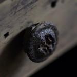 「Eucalyputus Knob」ユーカリ・グロボラスの実を使って作られた家具把手つまみ