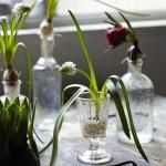 「古い小瓶に花を活ける」 小さな古瓶に植物を飾りませんか?