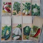 植物の種が入っていた紙の袋