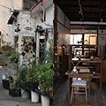 yahho_tanakamiho_shokubutsuten_index